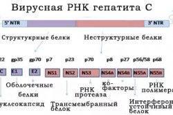 Virusnaya-RNK-gepatita-S-250x166.jpg