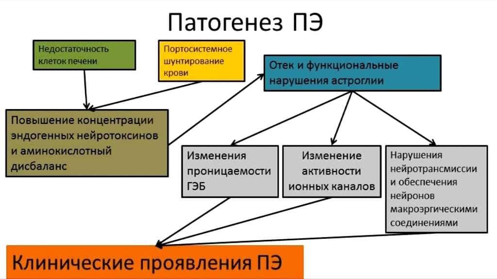 patogenez-pe-1024x576.jpg