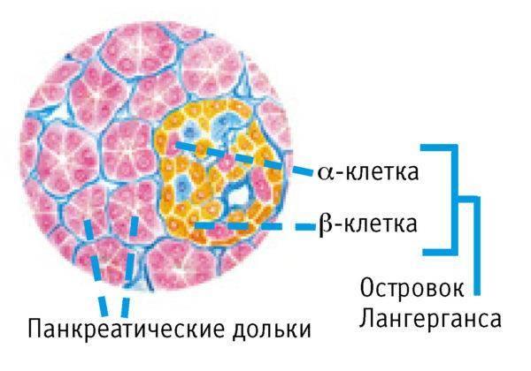 Gormonyi-podzheludochnoy-zhelezyi-i-ih-funktsii-600x420.jpg