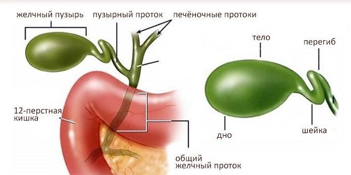 Peregib-zhelchnogo-puzyrya-chto-eto.jpg