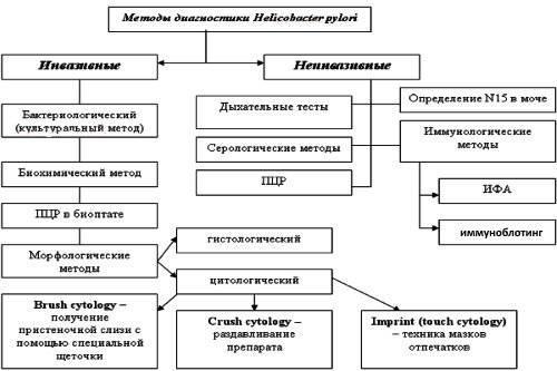Metody-diagnostiki-Helicobacter-pylori.jpg