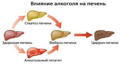 Vliyanie-alkogolya-na-pechen-500x274.jpg