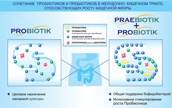 Probiotiki-i-prebiotiki-600x377.png