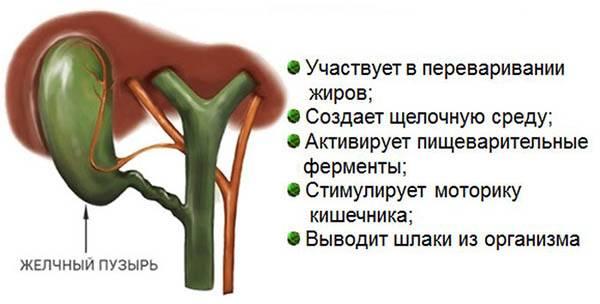 udalenie-zhelchnogo-puzyrya-1.jpg