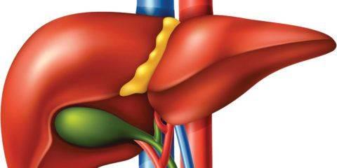 uplotnenie-stenok-yavlyaetsya-simptomom-mnogih-zab-480x240.jpg
