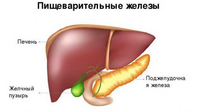 reaktivnye-izmeneniya-pecheni-i-podzheludochnoj-zhelezy-u-rebenka-7.jpg