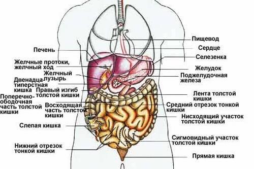 Organy-ZhKT.jpg