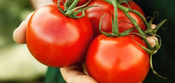 Svezhie-pomidory.jpg