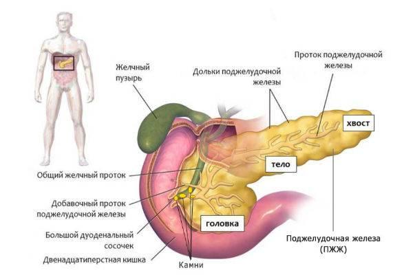 razvitie-pankreatita.jpg