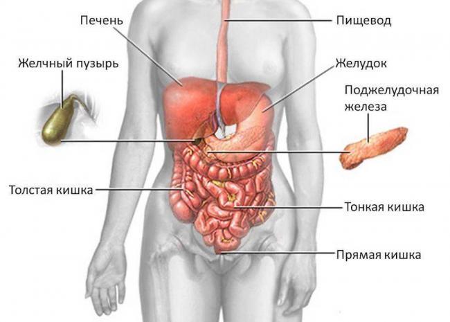 podzheludochnaya_zheleza.jpg