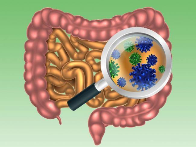 dt_160404_gut_bacteria_flora_800x600.jpg