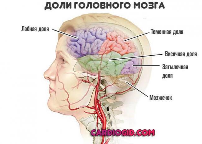 doli-golovnogo-mozga.jpg