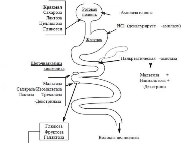 fermenty-kishechnika.png