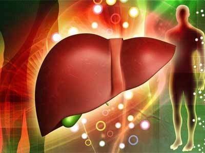 liver-2.jpg