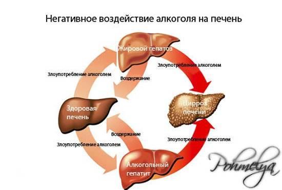vlianie_alkogolya_na_pechen_pohmelya_n572-min.jpg