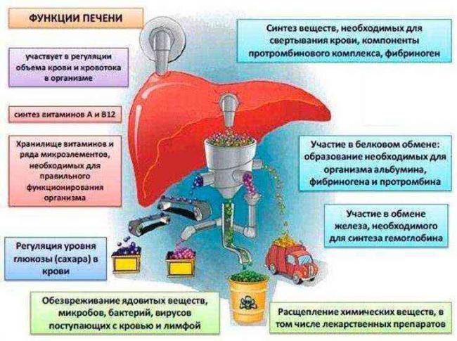 simptomy-razlozheniya-pecheni-u-alkogolikov-7.jpg
