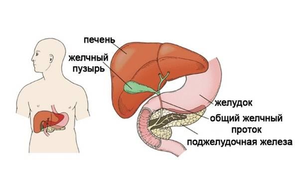 pechen_i_podzheludochnaya_zheleza.jpg