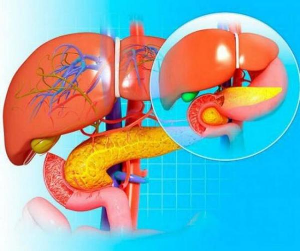 stroenie-organov.jpg