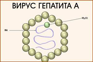 privivka-ot-gepatita_1.jpg