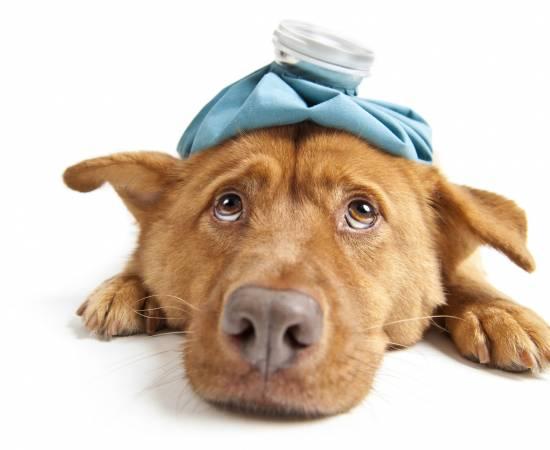 56c8b-51-cats-got-the-measles-dogs-got-the-flu-550x450.jpeg