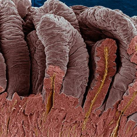 mikroflora-kishechnika.jpg