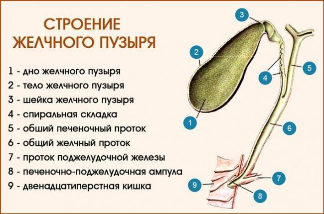 bolit-pechen-posle-udaleniya-zhelchnogo-puzyrya_22.jpg