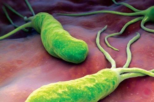 bakteriya-e1487855379325.jpg