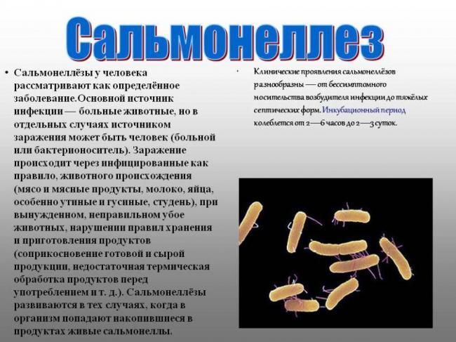 7382_priznaki-sal-moneleza-vyzvannogo-yaycami.jpg