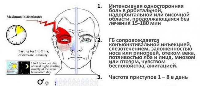1548330459_klasternye-ili-puchkovye-boli.jpg