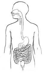 Vnutrennie-organy.jpg