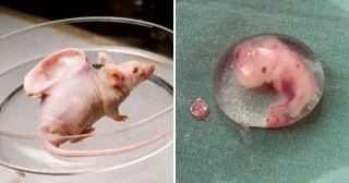 25 страннейших вещей, выращенных в лабораториях