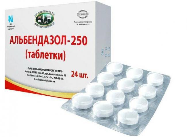 simptomy-gelmintoza-u-vzroslyh-12.jpg